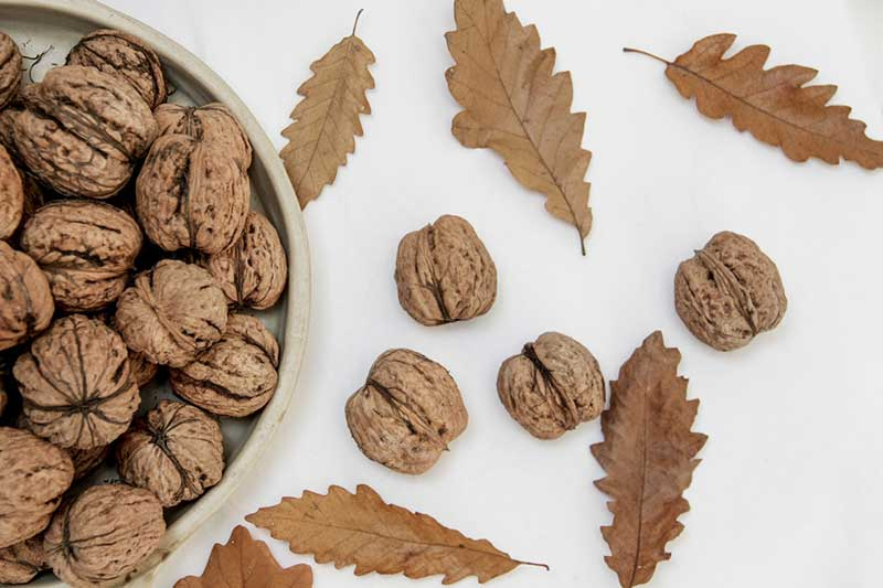 walnuts and leaves